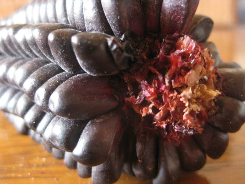 This picture is of the amazing purple corn. It is on the cob. However Api is the flour form of this corn.