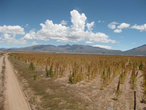 On the road to the Quinoa heart land. Andes South America.
