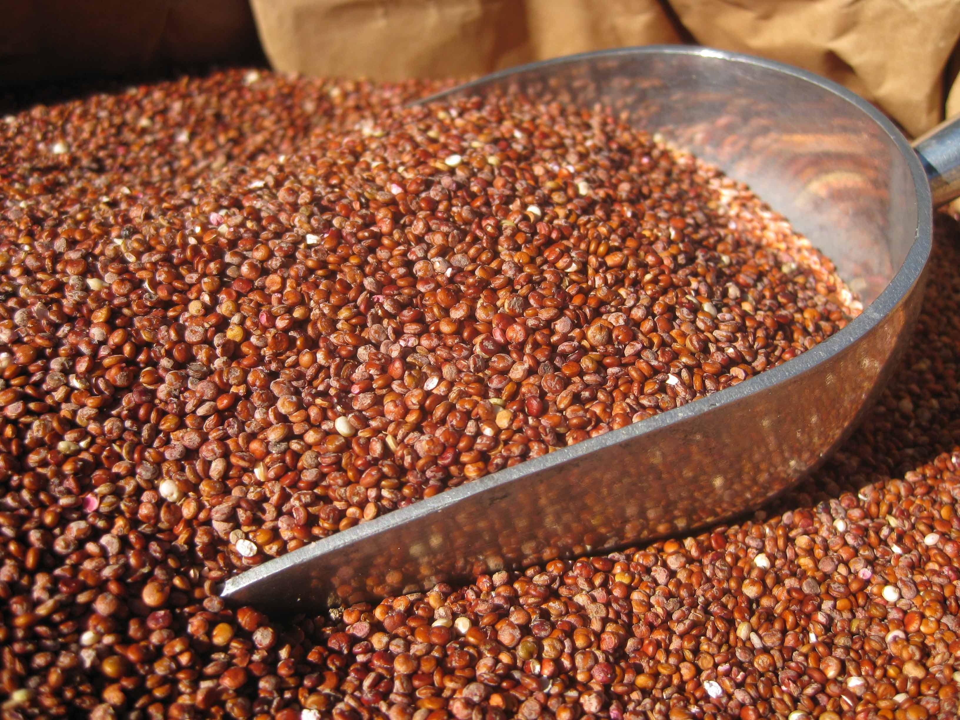 5kg Quinoa Red - Gluten Free – Allergy Free