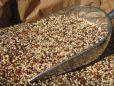 5kg Quinoa Tricolour- Gluten Free – Allergy Free